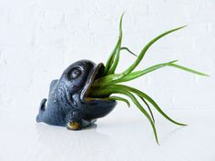 Air Plant Garden - Moby Fish Whale - Brass Patina. $95.00, via Etsy.