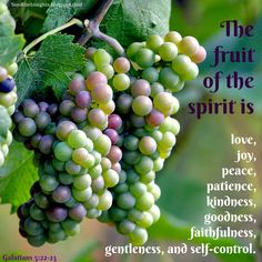 SonRise Insights-Lessons Along the Path With God: Project Intentional Fruit