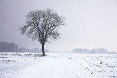 Tree, Alone, Night, Snow, Winter, Cold, Icy, Field