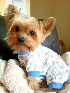 filhotes-cachorros-pijamas (9)