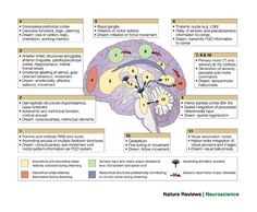 The cognitive neuroscience of sleep: neuronal systems, consciousness and learning