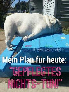 #Hund #Hunde #Bully #Bulldog