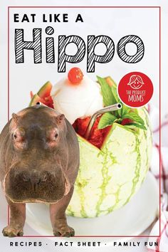 Learn interesting facts about hippos while you sip on this delicious Melon Sorbet Float. What better way to encourage learning than incorporating a sweet treat. Whip up this simply devine drink and relax by the pool this summer! Hippo Facts, Honeydew Melon, Watermelon Recipes, Ginger Ale, Recipe For Mom, Mom Blogs, Sorbet, Eating Well, Fun Facts