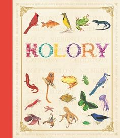 First Concept: Animal Colours Colorful Animals, Brown And Grey, Concept, Map, Books, Youth, Documentaries, Livres, Libros