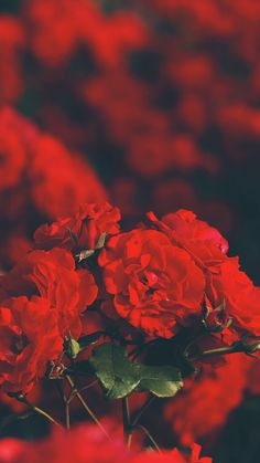 Red Aesthetic Wallpaper Ipad 27 Ideas For 2019 Wallpapers Android, Android Wallpaper Red, Heart Iphone Wallpaper, Red Wallpaper, Flower Wallpaper, Nature Wallpaper, Pattern Wallpaper, Cute Wallpapers, Wallpaper Backgrounds