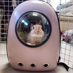 Super Pet Bunny Names Website 37 Ideas Rabbit Names, Bunny Names, Rabbit Toys, Pet Rabbit, Rabbit Carrier, Bunny Supplies, Pet Bunny Rabbits, Baby Animals, Cute Animals