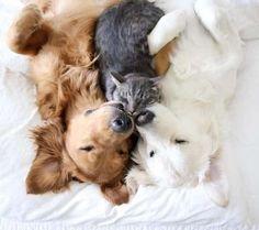 rencontre chiot et chien adulte rencontre adulte sm