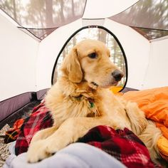 @samanthabrookephotoThe two Golden Retrievers (pictured is yet another Aspen) are regulars on one of our all-time-favorite Instagram accounts, Camping with Dogs. They travel with owner and photographer Samantha Tobias, posing perfectly for some adorable photos.