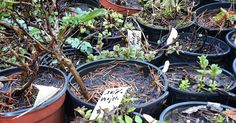 Gourmetkaters Garten: Es regt sich was... #gardening #garden #spring #herbs