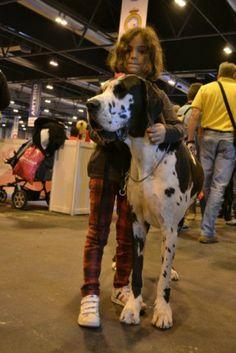 Dogs & love exposición canina madrid