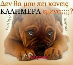 Greek Quotes, Funny Images, Good Morning, Favorite Quotes, French Bulldog, Life Is Good, Thankful, Jokes, Messages
