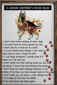 Wicked Training Your German Shepherd Dog Ideas. Mind Blowing Training Your German Shepherd Dog Ideas. German Shepherd Memes, German Shepherd Puppies, Funny German Shepherds, German Shepherd Training, Dog Quotes, Animal Quotes, I Love Dogs, Cute Dogs, Border Collie Puppies