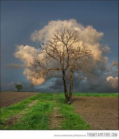 The cloud tree...want this as a picture on my wall!!!
