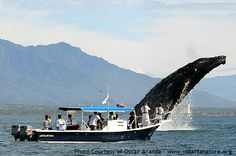 Ocean Friendly Whale Watching Tours ~ Puerto Vallarta