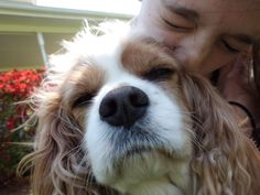 the cutest cavalier king charles spaniel you will ever see.