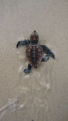 Seasons of love – journeys to plan Babyschildkröte Cute Creatures, Sea Creatures, Beautiful Creatures, Animals Beautiful, Beautiful Images, Cute Baby Animals, Animals And Pets, Funny Animals, Animals Images