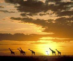 Masai Mara National Reserve , Kenya