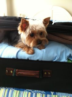 """""""You're not leaving without me!"""""""