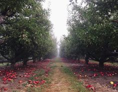 """<b>Blake's Orchard and Cider Mill</b><span style=""""font-weight: 400;""""><br></span>  <i><span style=""""font-weight: 400;"""">17985 Armada Center Rd., Armada; 586-784-5343; blakefarms.com</span></i><span style=""""font-weight: 400;""""><br></span>  <span style=""""font-weight: 400;"""">Blake's apple empire encompasses the Armada mill, two Armada orchards, and another one in Almont. But it's the mill that has the petting zoo for the kids and the orchard products for your winter larder. The orchard is s..."""