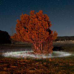 Fairy ring around tree