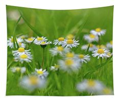 Daisies Tapestry x by Ren Kuljovska. Our premium tapestries are available in three different sizes and feature incredible artwork on the top surface. Framed Prints, Canvas Prints, Spring Garden, Art Market, Tapestries, Daisies, Fine Art Photography, Fine Art America, Art Pieces