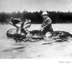 Teddy Roosevelt riding a moose