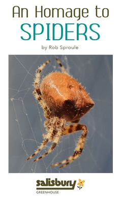 An Homage to #Spiders - by Rob Sproule, Salisbury Greenhouse