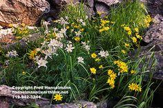 McCullough Gulch, Breckenridge, Colorado Mountains, Rocky Mountain Photography