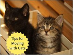 Tips for Moving with Cats: Timeline + Checklist
