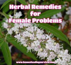 Herbal Remedies For Female Problems! More info here: http://homesteadingsurvival.com/herbal-remedies-for-female-problems/