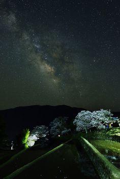 Milky Way and Cherry tree in full bloom, Mitake, Misugi town, Tsu, Mie, Japan