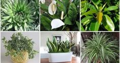 These Plants Are Oxygen Bombs. You Must Have at Least ONE of Them to Refresh…