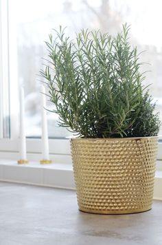 I love the pot, and the plant!! Re-pin if you like/dislike!!