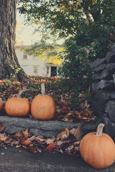 Pumpkins and cooler winds and colored leaves on the ground! MMMM I smell the coffee and pumpkin in the air!
