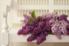 Gorgeous lilacs.  Waiting for mine to bloom, only a day or so away.  The best fragrance of spring.