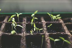 Construcción de una mesa de cultivo casera - https://www.jardineriaon.com/construccion-una-mesa-cultivo-casera.html #plantas