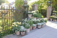 Pots with flower bulbs, Claus Dalby Outdoor Rooms, Outdoor Gardens, Outdoor Ideas, Pots, Bulb Flowers, White Gardens, Garden Statues, Garden Planters, Garden Paths