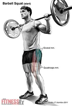 Crown Your Lower Body - With Squats, the King of Thigh Builders Muscle Building Workouts, Gym Workouts, Barbell Squat, Leg Training, Improve Blood Circulation, Body Is A Temple, Weight Lifting, Weight Gain, Body Sculpting
