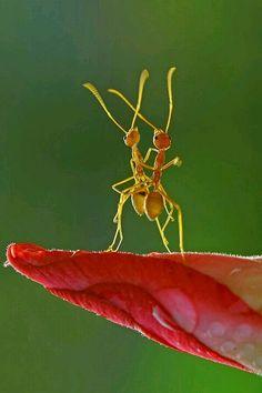 Dance of the Ants macro foto Beautiful Creatures, Animals Beautiful, Romantic Animals, Tai Chi Chuan, Foto Macro, Funny Animals, Cute Animals, Party Animals, Funny Dogs
