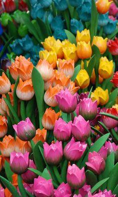 Bloemenmarket (flower market) in Amsterdam