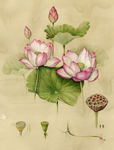 Flowers like this (colour fading like this too, but where pink, change to blue)