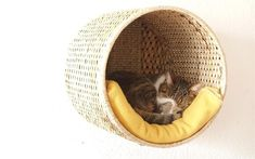 ikea hack cat basket wall mounted