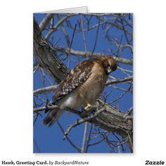 Hawk, Greeting Card. Greeting Card