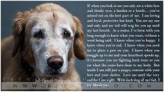 Dog - Golden Retriever - Senior Dog - Poem - Photography