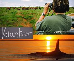 10 Amazing Volunteer Vacations Where You Can Help Animals
