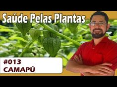 Saúde pelas Plantas - Camapú [HIV, herpes labial, câncer, Alzheimer, anti-inflamatório] - YouTube