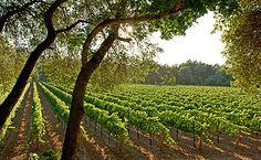 "Savor a ""Sampler Menu"" the Region's Best Offerings - Napa Valley - http://www.visitcalifornia.com/destination/spotlight-napa-sonoma"