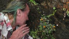 Patrick Blanc observing the brown bullate leaves and bright orange flowers of Gesneria shaferi on a vertical seeping rock, La Farola, Baracoa, Cuba, Feb. 2017
