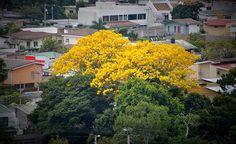 ¡Árboles multicolores anuncian el verano!