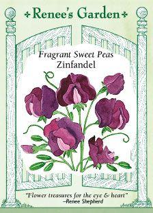 Google Image Result for http://www.reneesgarden.com/seeds/front/flowers/5362-Front.jpg